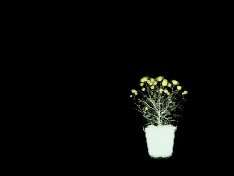 عکس گل با زمینه مشکی